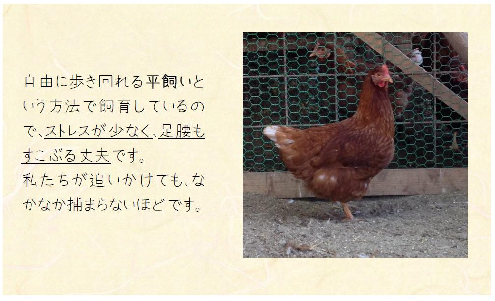鶏の飼い方2